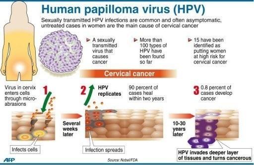 human papillomavirus pap)