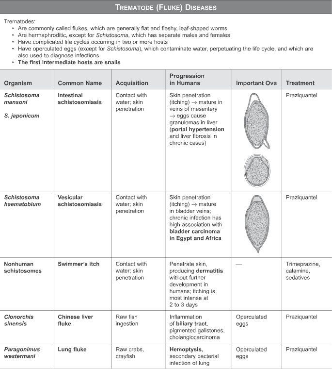schistosomiasis gmat)