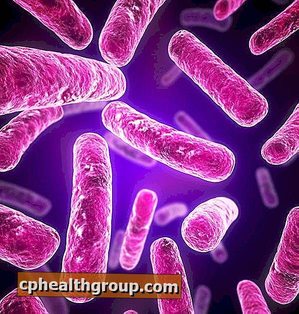 Malaria – boală determinată de protozoare