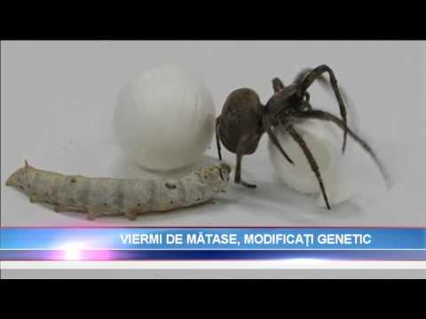 viermi de unică folosință)