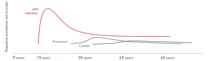 Prevenirea cancerului prin intermediul unor programe de screening, Hpv cancer probability
