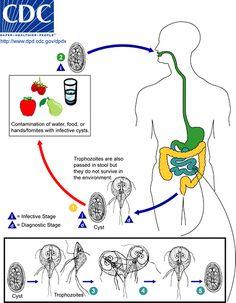 medicament pentru giardie și ameba