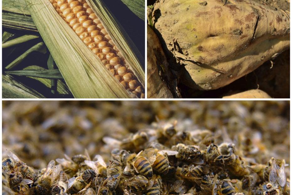 medicament care ucide viermii micro papillomas