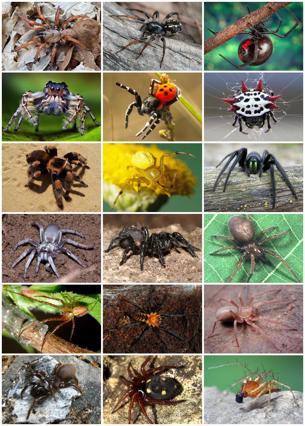 păianjeni prădători și paraziți)