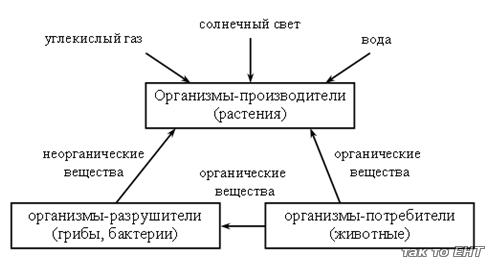 ciclu - definiție și paradigmă | dexonline