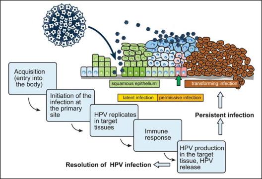 Human papillomavirus infection epidemiology and pathophysiology,