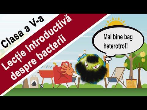 parazit medicamente rele)