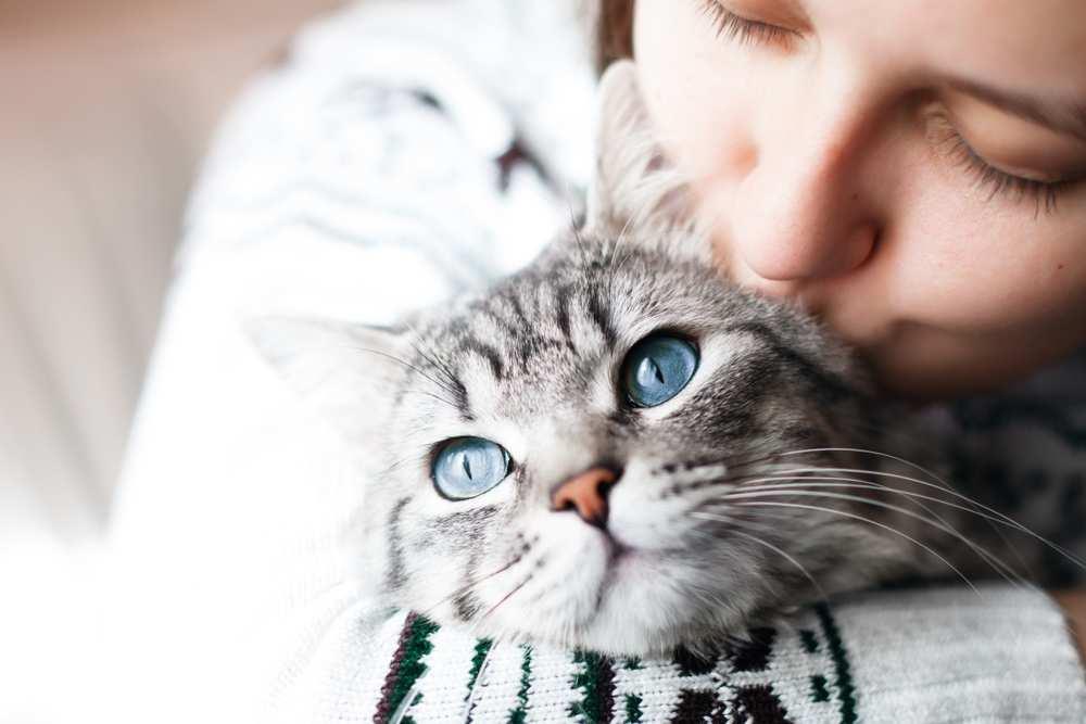 Diareea la pisici – Paraziţii intestinali sunt o cauză frecventă