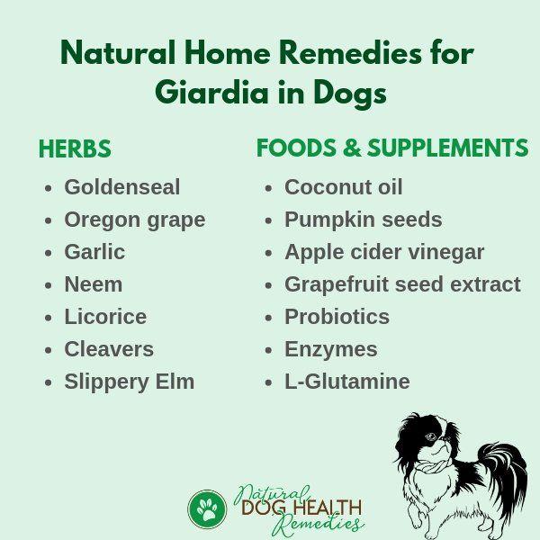 giardia remedi natural)