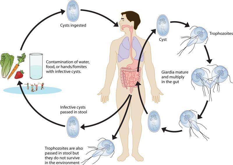 vaccino papilloma virus quando si puo fare hpv after wart removal