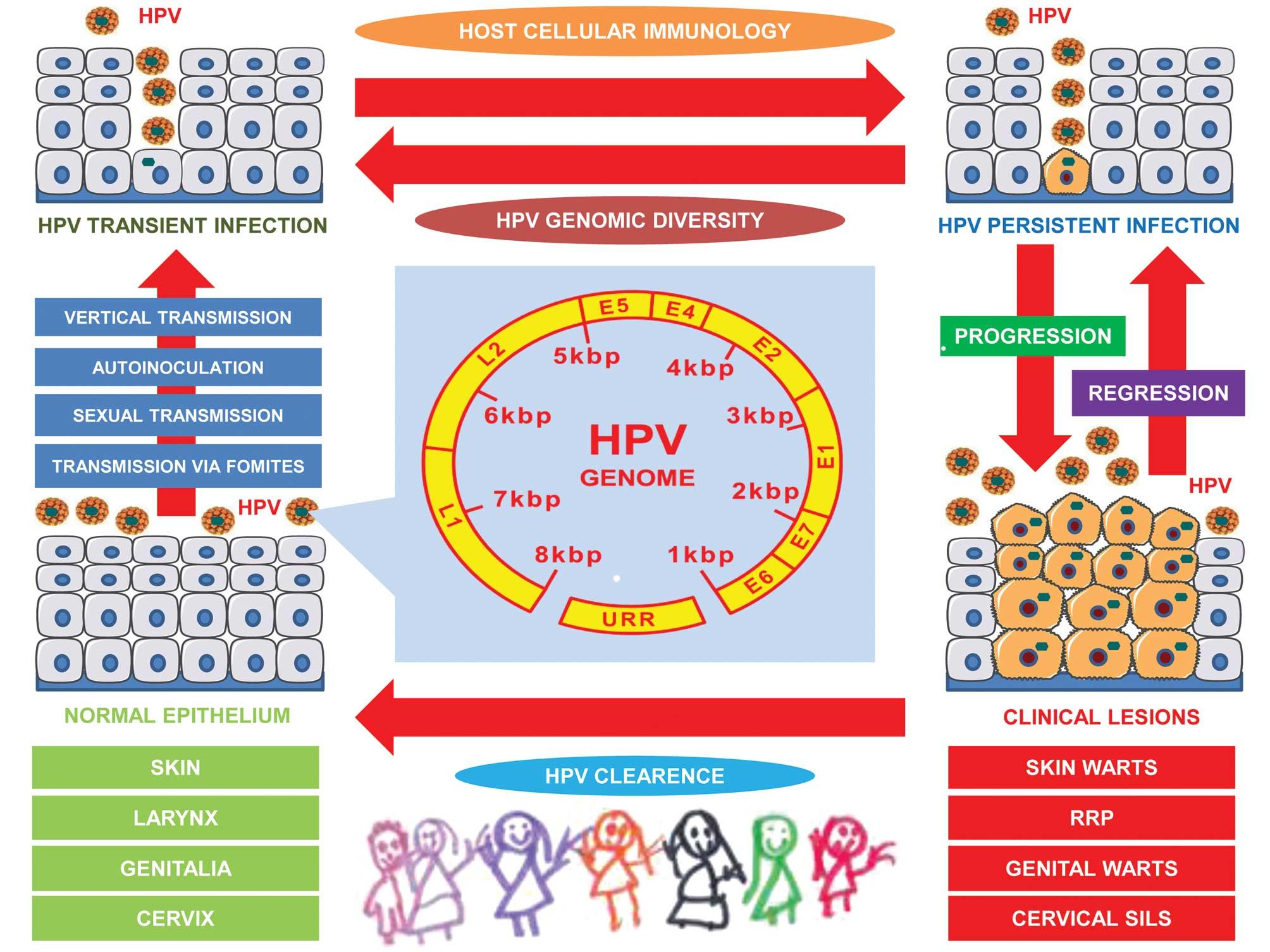 Human papillomavirus skin, Manifestările cutanate ale infecţiei cu virusul papiloma uman