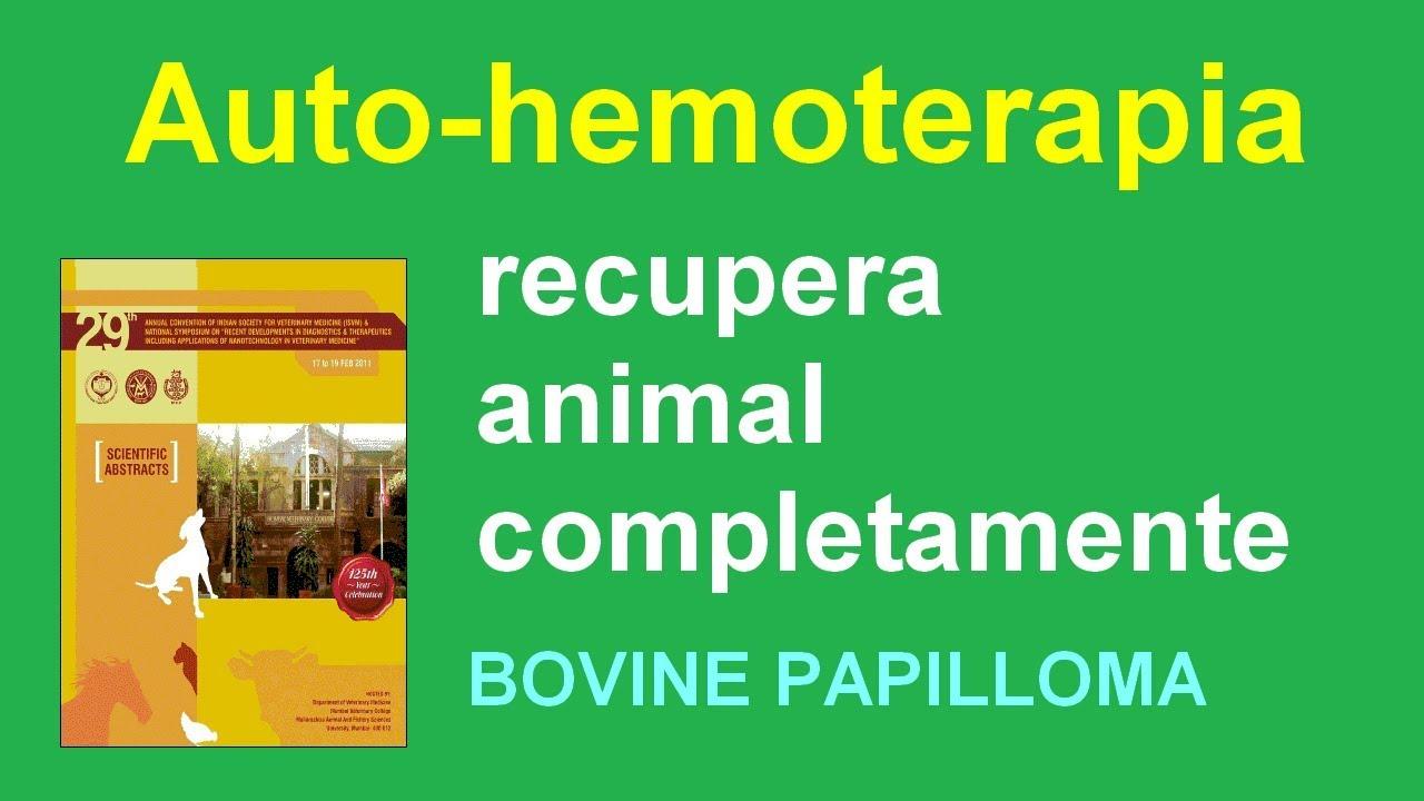 unguent cicloferon pentru recenzii papilomas