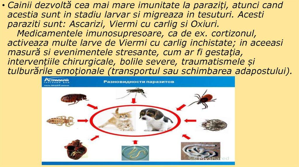 Parazitii externi la animalele de companie: riscuri pentru om