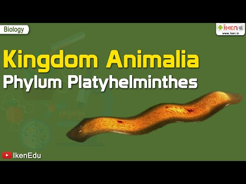 reproducere platyhelminth