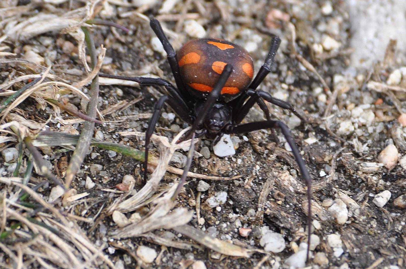 insecta nu este binevenită)