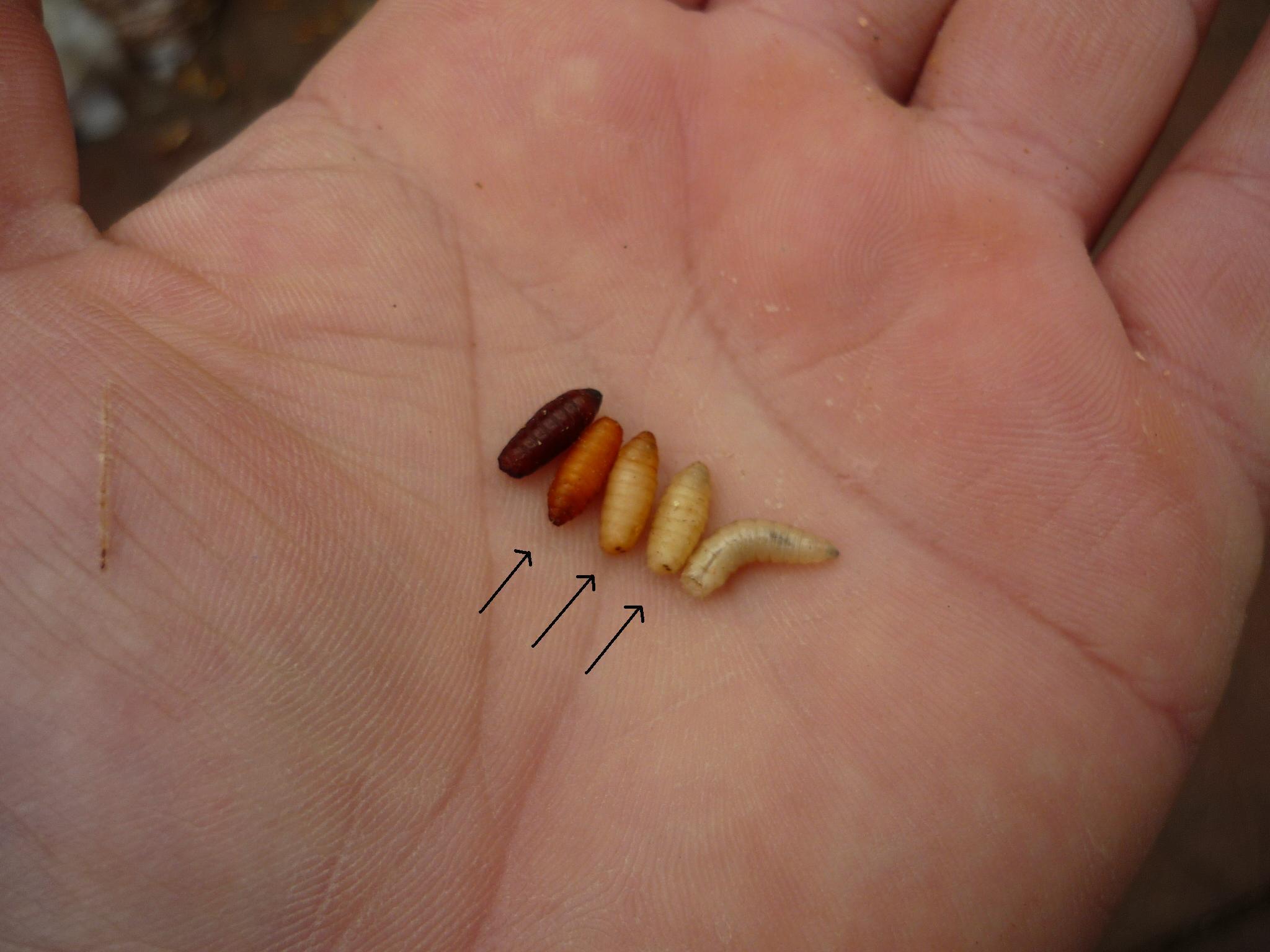 Iesirea de viermi dupa tratament - Virus papiloma saliva