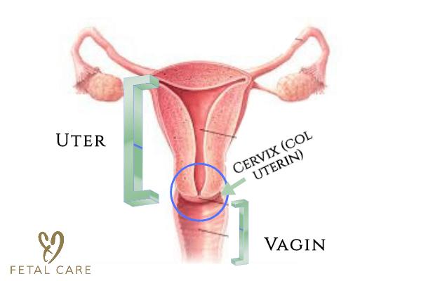 dacă se găsește condilom pe colul uterin