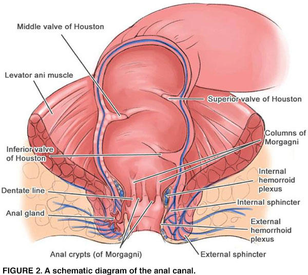 Can hpv cause rectal cancer. hhh | Cervical Cancer | Oral Sex, Does hpv cause colorectal cancer