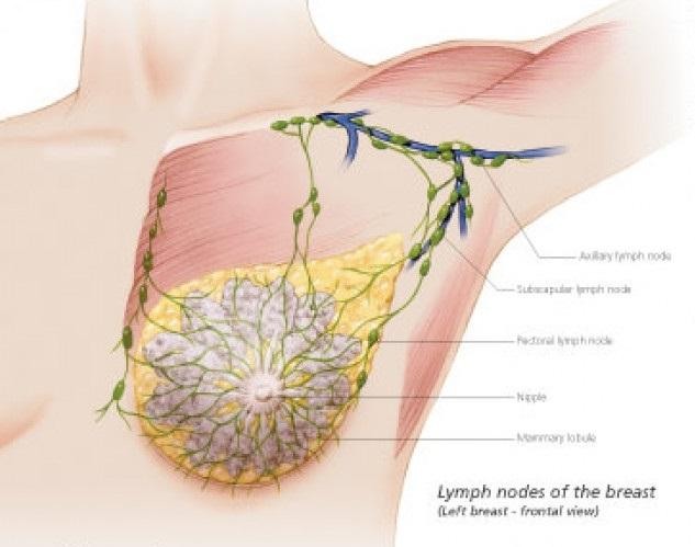 margele albe papillomavirus et accouchement