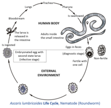 helminth medical term meaning