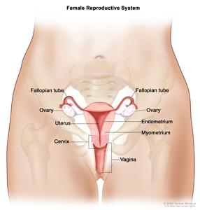 Peritoneal cancer and cbd oil