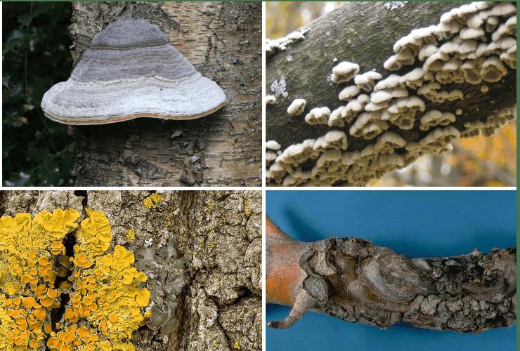 curățarea corpului de ciuperci parazite