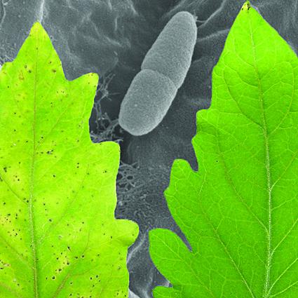 îndepărtarea papilomelor din limbă hpv virus warzen mann