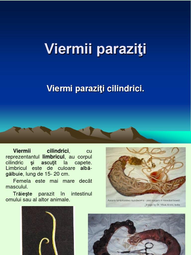 vierme cilindric parazit)