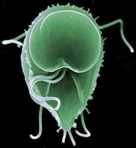 simptome de giardia antibiotice