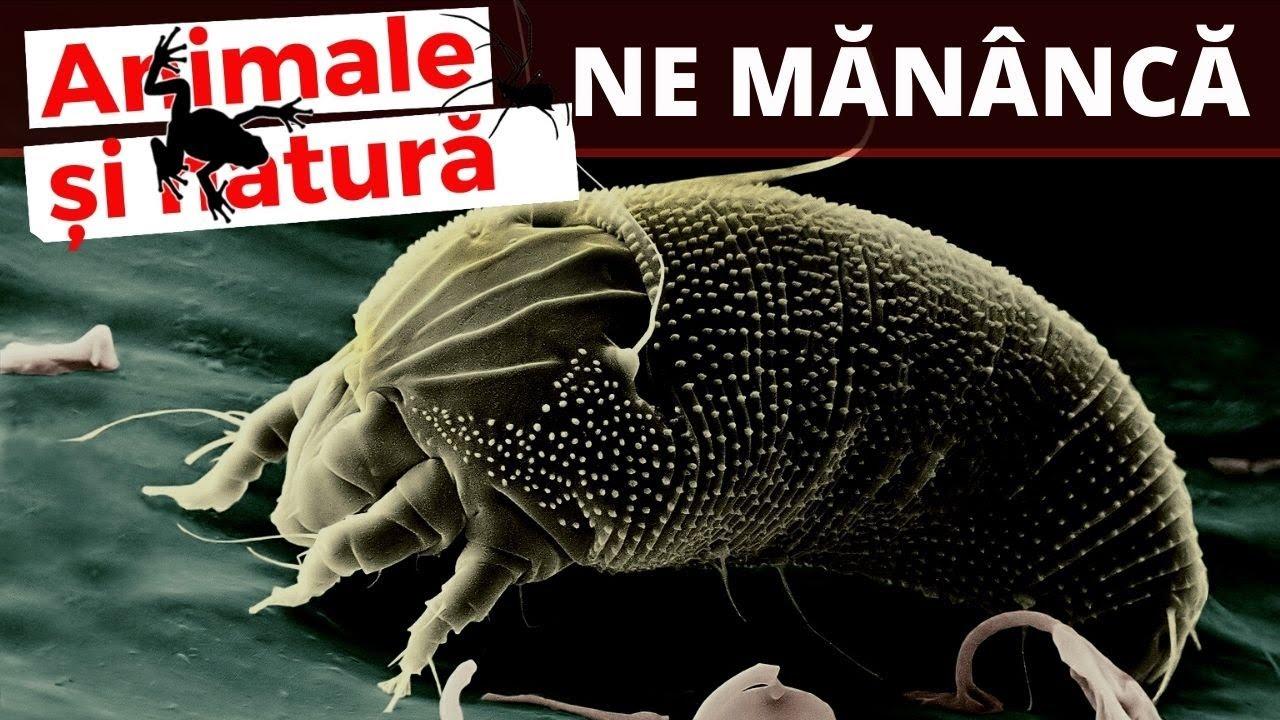 prevenirea preparatelor viermilor umani)