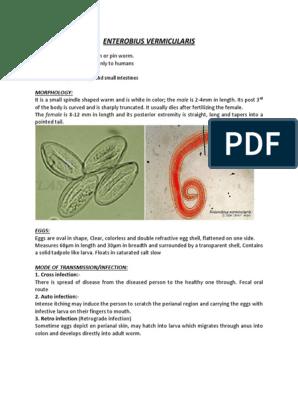 Penyakit enterobius vermicularis, Penyakit enterobius vermicularis
