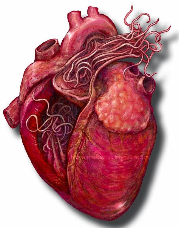 simptome viermi inimii primele simptome ale helmintiei pentru adulți