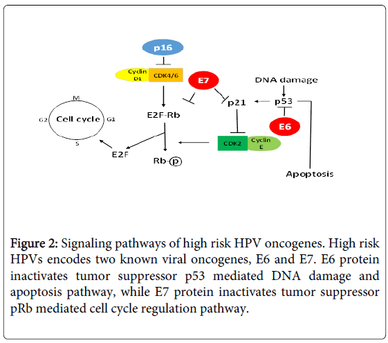 hpv high risk e6 e7