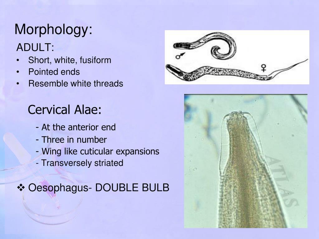 produse de detoxifiere schistosomiasis natural treatment