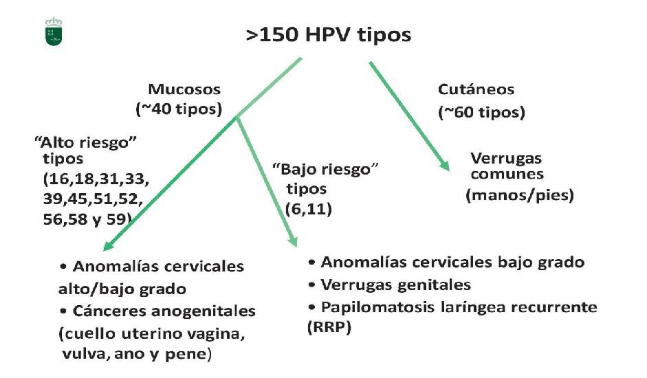 virus del papiloma bajo