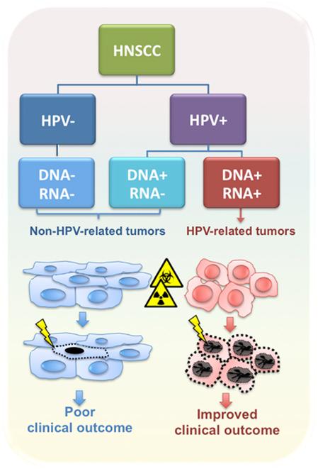hpv hno tumor)