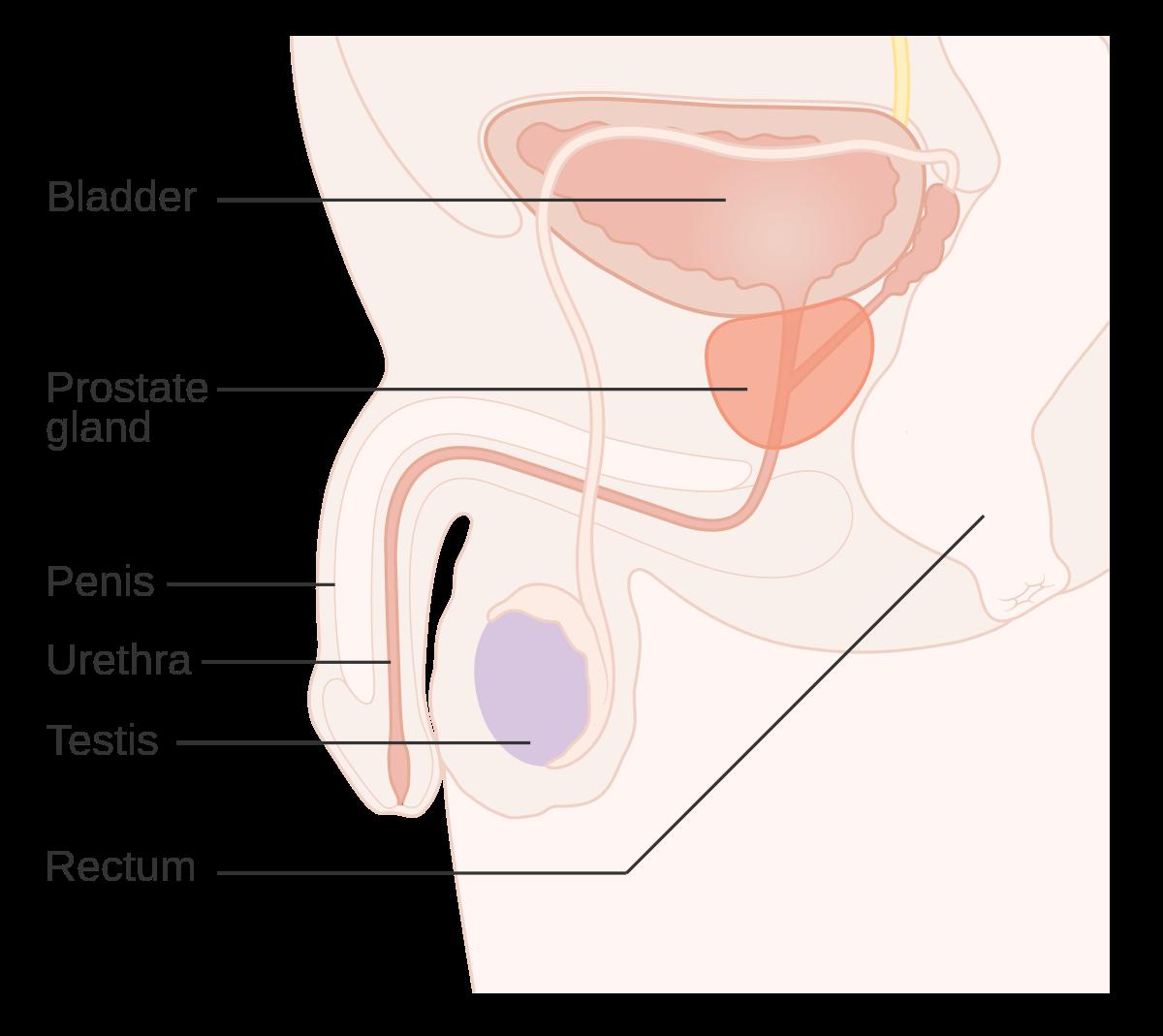 hpv virus prostate cancer