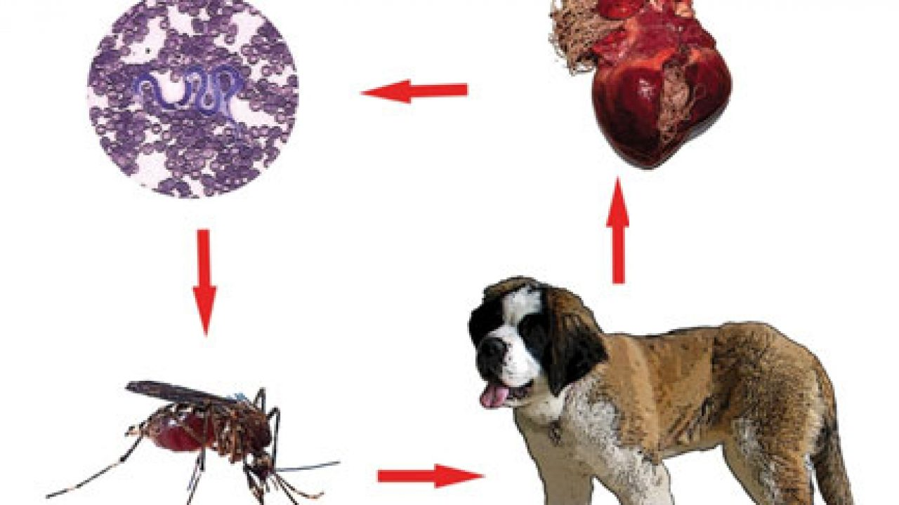 simptomele unui vierme
