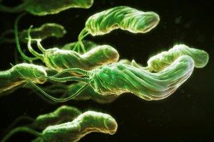 Cum să donezi sânge pentru giardioza toxocarizei cu vierme rotunde
