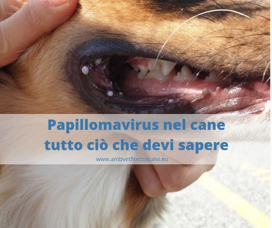 papilloma cane)