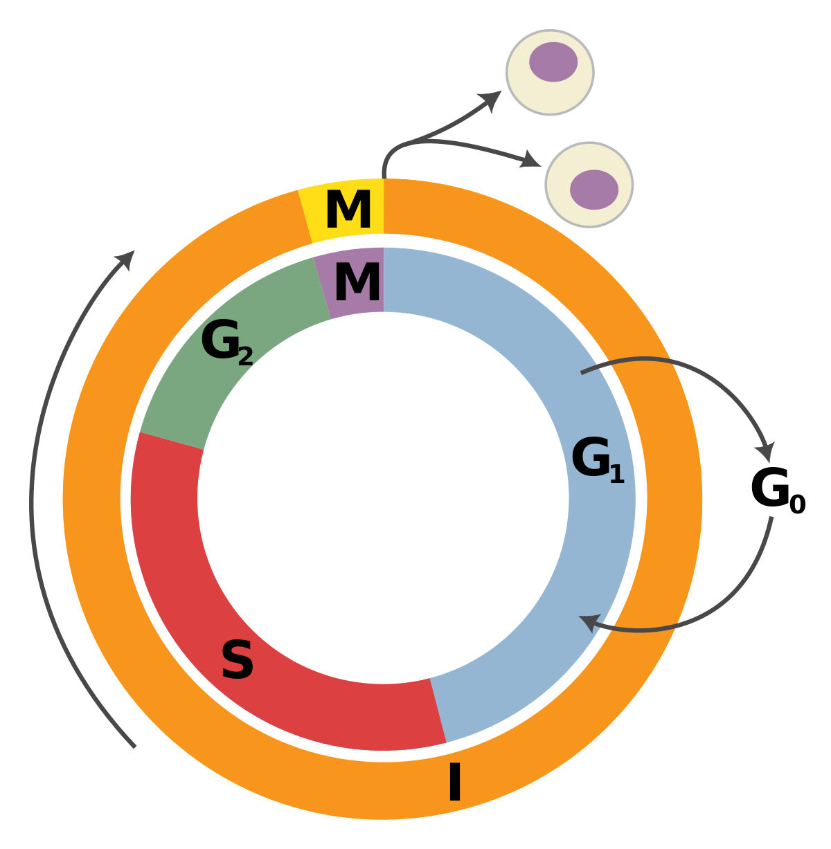 Familial cancer tumour suppressor genes, [Genetic susceptibility to cancer].