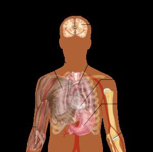paraziți în plămâni cum să trateze control de helminthosporium en arroz