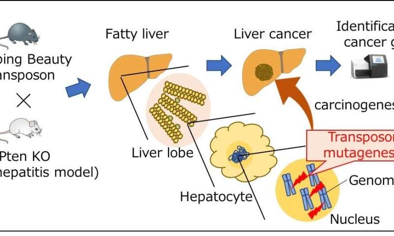 hepatic cancer genetic