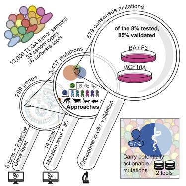 Mutații BRCA1 și BRCA2 - cancer ereditar sân/ovar - Synevo