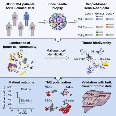 hepatic cancer genes)
