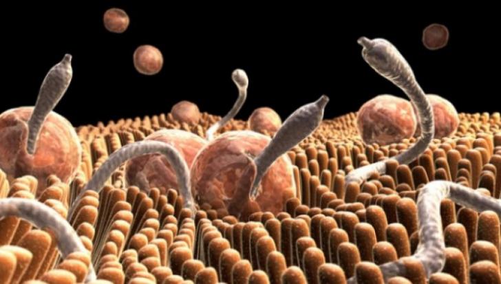 Vierme parazit - Wikipedia