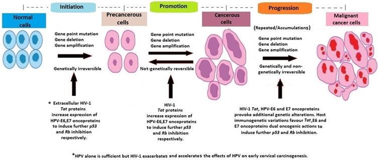 hpv et cancer colorectal