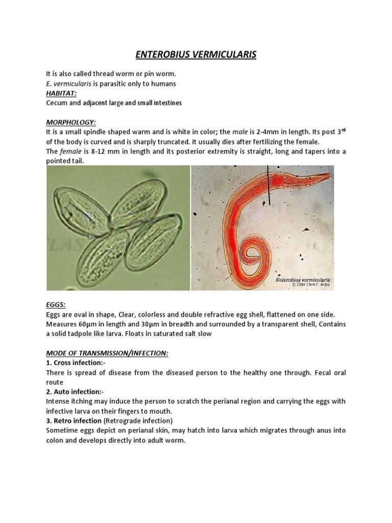 viermi pinworms)