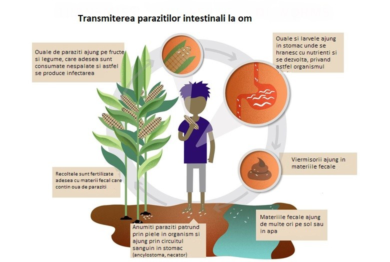 paraziți în alimentarea cu apă)