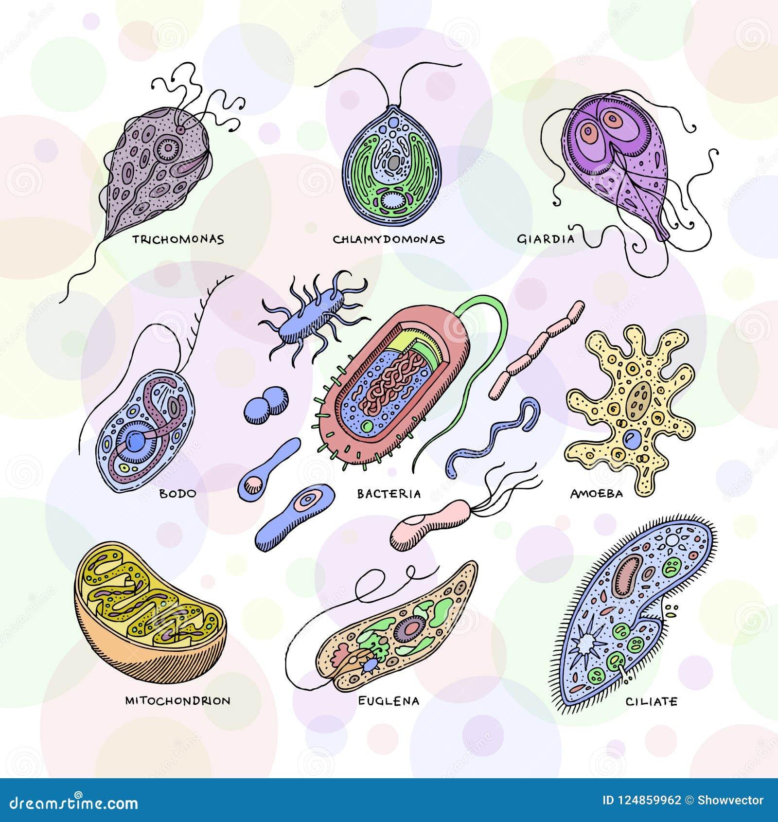 helminths sunt bacterii a descoperit negi genitale
